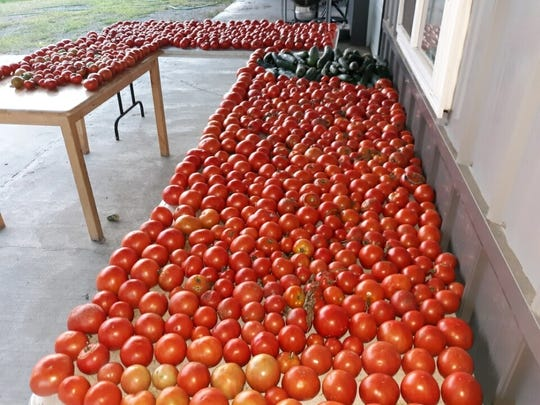 Lovina and Joe have a bountiful supply of tomatoes from their garden. Many quarts of vegetable juice and pizza sauce are canned and shared with family for the winter months ahead.
