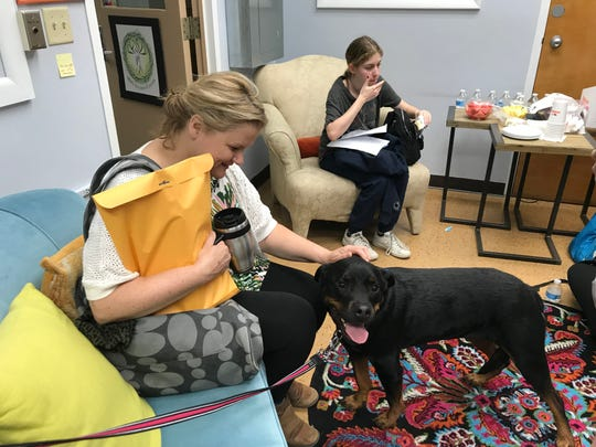 During high stress time such as exam periods, therapy dogs are welcomed to Millburn High School