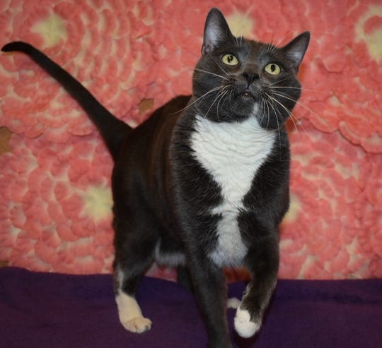 Willow Tree is available for adoption at 11129 Michigan Ave. in Youngtown. For more information, call 623-876-8778 after 10 a.m.