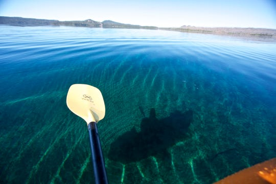 Waldo Lake's water is so clear you can see your shadow on the bottom of the lake, even when it's quite deep.