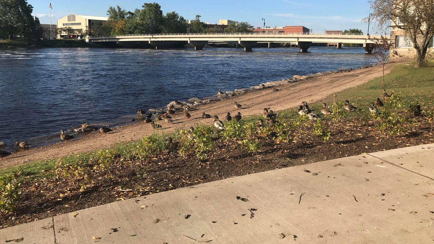 Wisconsin Rapids: Committee approves ban on feeding ducks, geese on city property