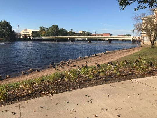 Wisconsin Rapids City Council to consider ban on feeding ducks, geese on city property