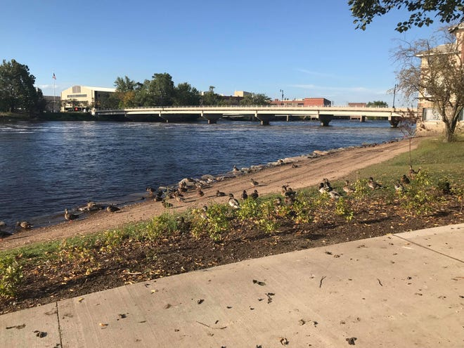 Ducks lounge along the shoreline of the East River Conservancy Area in Wisconsin Rapids Tuesday, September 17, 2019.