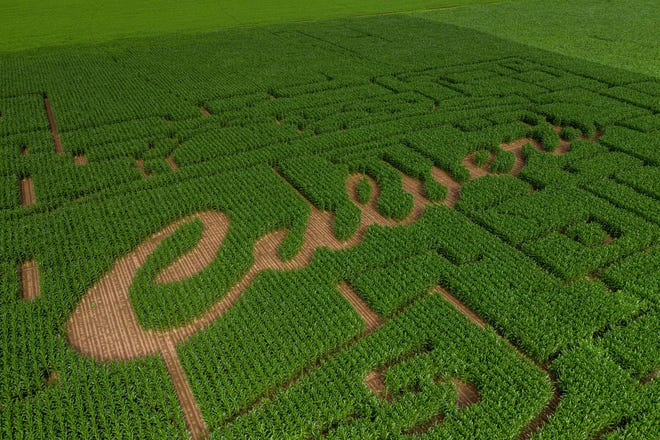 Culver's has worked over the last six years with farmers across the country to create the Thank You Farmers Project corn mazes to raise awareness for the program.  They are teaming up with Feltz's Dairy Story in Stevens Point this fall.