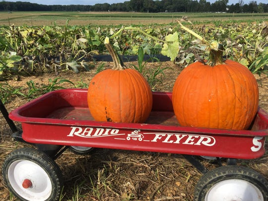 Take your pumpkins for a ride!