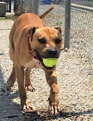 Roger is one-year-old and needs a home.