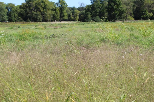 The Sandusky County Park District will be planting native wildflowers and prairie grass at River Cliff Park in the spring of 2020.