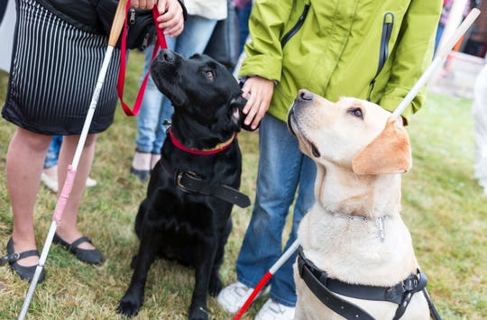 Guide dogs for the blind.