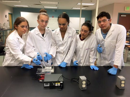 From left, research students Viviana Nicoll, Lauren Paulk, Alea Darrow, Eliza Lopez and Daniel Mendoza are loading Apis mellifera (honeybee) DNA into an electrophoresis gel to identify Wolbachia infestation.