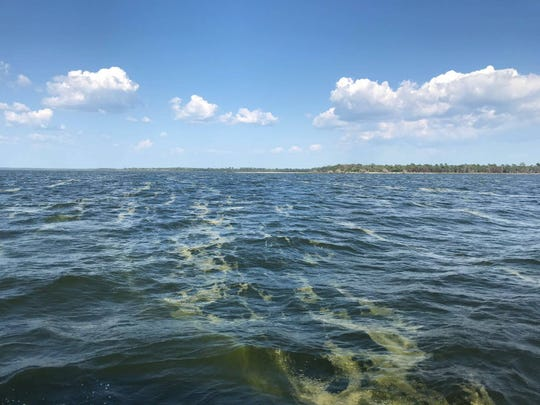 Escambia County officials are monitoring a possible green algae bloom in East Bay.