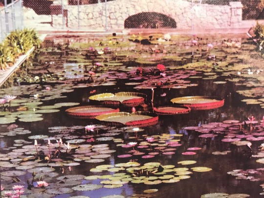 The International Water Lily Collection at Civic League Park in San Angelo had one pond with 75 plants when it debuted in 1988.