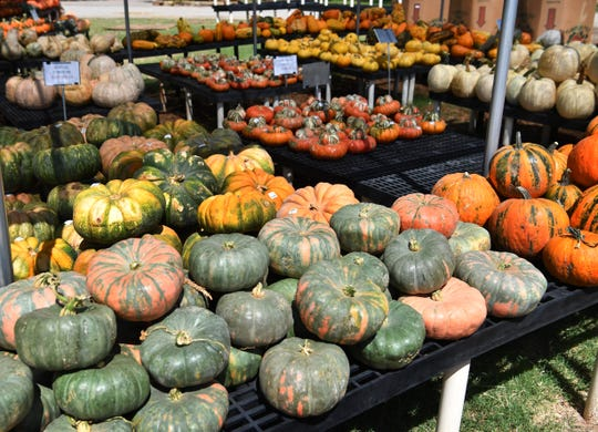 A wide variety of colorful pumpkins and ornamental gourds are being stocked for the Pumpkin Patch at Smith's Gardentown Farms.