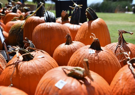 Fall is officially here! We've come up with some way to celebrate the season, but what are your favorite autumn traditions? Let us know by emailing lsmith@newsleader.com.