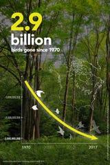 North America has lost almost 3 billion birds since 1970.