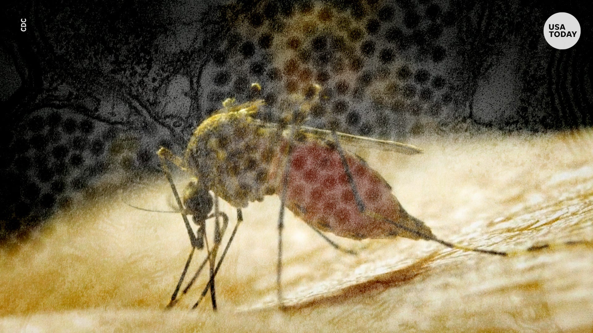 Breaking news: Diseases like West Nile, EEE and flesh-eating bacteria are flourishing due to climate change