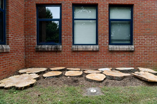 Slices of mature trees that were removed from the YWCA property in Asheville.