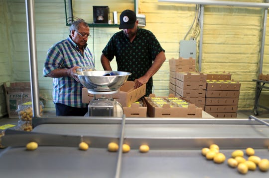 Tadros Tadros, 77, and his son Mark Tadros, 38, package Barhi dates inside the packinghouse of their business, Aziz Farms, in Thermal, Calif., on September 13, 2019.