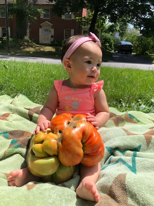 Steve and Aileen Wright's daughter Ary with a tomato over six pounds.