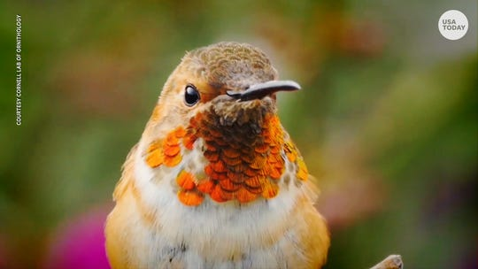 There are 3 billion fewer birds in North America than there were in 1970