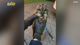 Hmmm was this owl trying to deliver a letter from Hogwarts? Buzz60's Mercer Morrison has the story.