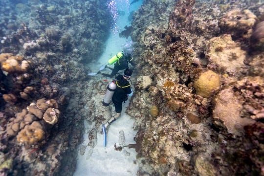 Divers Ray Taylor, top, and Andrew Todd plant staghorn coral inside the the White River Fish Sanctuary on Feb. 12, 2019, in Ocho Rios, Jamaica.