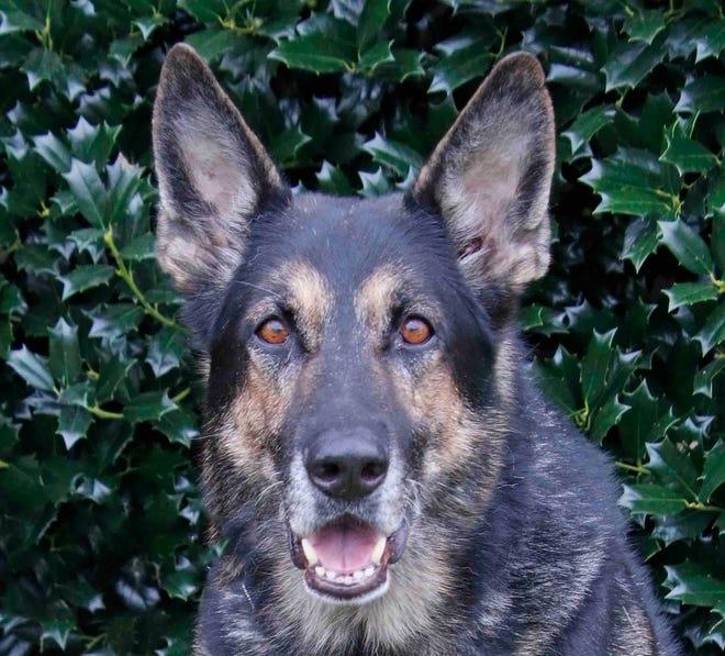 Police Service Dog, Solo