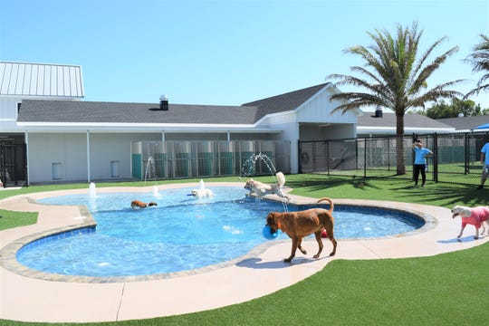 Photo renderings show a bone-shaped swimming pool at a Pet Paradise location.