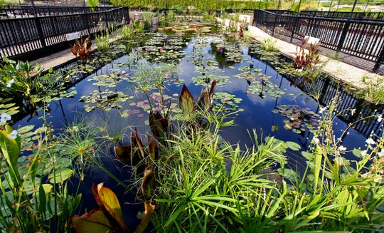 The International Waterlily Collection in San Angelo, seen here in this Friday, Sept. 20, 2019 photo, plays host to the annual LilyFest this weekend.