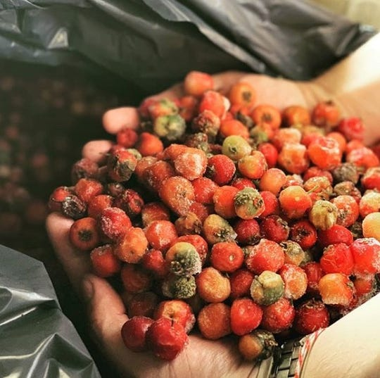 Mayhaw berries were used to make Great Raft Brewing's Come What Mayhaw sour beer.