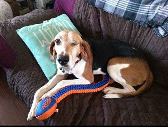 Cherry is a 10-year-old hound dog who is much happier after her painful eye was removed.