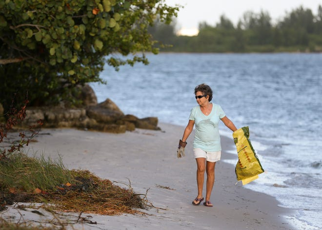 Volunteers collect trash on the Causeway Island during the annual International Coastal Cleanup day on Saturday, September 21, 2019, in Fort Pierce. The Smithsonian Marine Ecosystems Exhibit tallied over a 100 food containers, 110 plastic bags, 78 aluminum cans and 90 plastic bottles among the many items of trash collected by the 51 volunteers. The trash collected will be added to the Ocean Conservancy's annual Cleanup Reports.