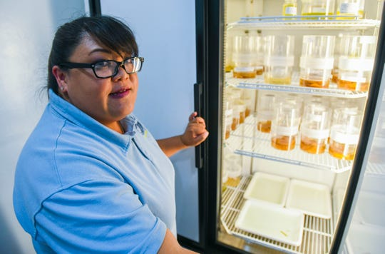 Environmental Public Health Officer Claire Baradi shows how mosquitoes can be raised from the larvae stage to an adult, within environmental chambers, at the Department of Public Health and Social Services' Division of Environmental Public Health laboratory in Dededo on Sunday, Sept. 22, 2019. The agency is collect data on the insects to aid in the prevent the spread of dengue fever, after the first locally acquired case of the virus was determined on September 11.
