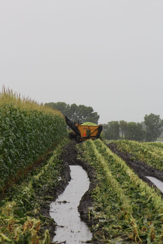 Machinery battles its way through a soggy field in a quest to harvest sweet corn in Fond du Lac County on Sept. 22.