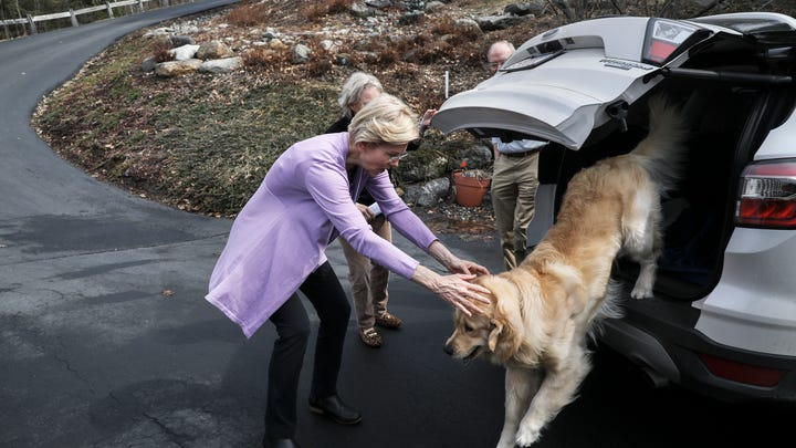 Meet the dogs of the 2020 presidential election