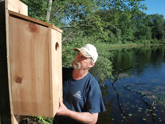 Michigan conservationists created artificial homes for ducks while wetland forests were growing back. Wood duck boxes are still widely used today.