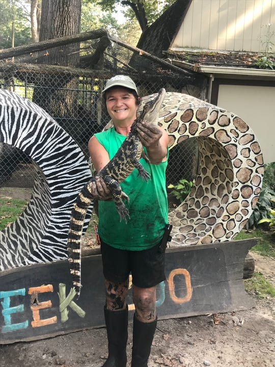 Julie Angell, Indian Creek Zoo manager, holds the American alligator captured Friday