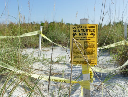 """Do not disturb sea turtle nest,"" a yellow sign reads at a sea turtle nesting site in Tigertail Beach, Marco Island on Sept. 11."
