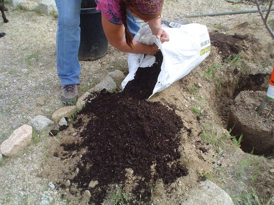 Add a source of nitrogen to your backfill soil to concentrate for low soil fertility.