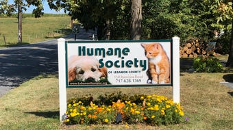 2 senior cats are featured at the Humane Society of Lebanon for the month of September.