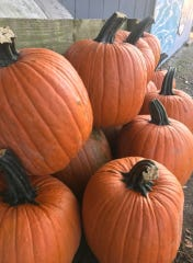 Pumpkins are available for purchase at Madysen's Produce in Sandusky.