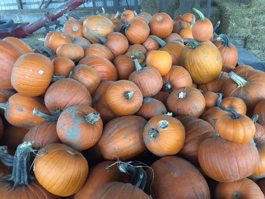 Pumpkins are available for purchase at O'Hair Farms in Croswell.