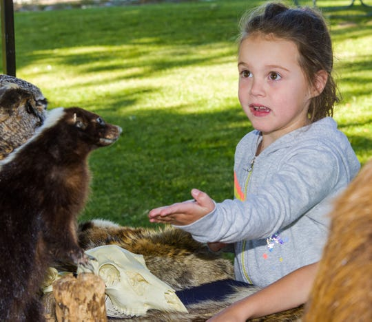 Alexys Miller, 6, of Yerington asks about a stuffed skunk at the Nevada Department of Wildlife booth.