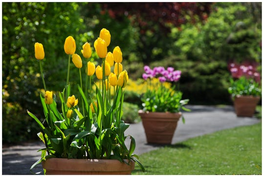 When it comes to plants, bulbs are about as easy as it gets. They can be grown in the ground or containers.