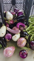 A selection of eggplants available at the Staunton Farmers' Market on Sept. 7 2019.