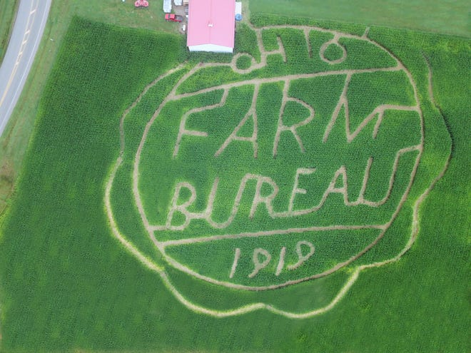 A corn maze at McDonald's Greenhouse has been cut in the image of the Ohio Farm Bureau's centennial logo, which was also painted on a barn at the farm in May.