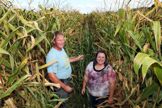 Doug and Beth McConnell stand between rows of corn planted 60 inches apart on their farm east of Zanesville. In between rows they have planted a variety of cover crops that they hope will return nutrients to the soil.