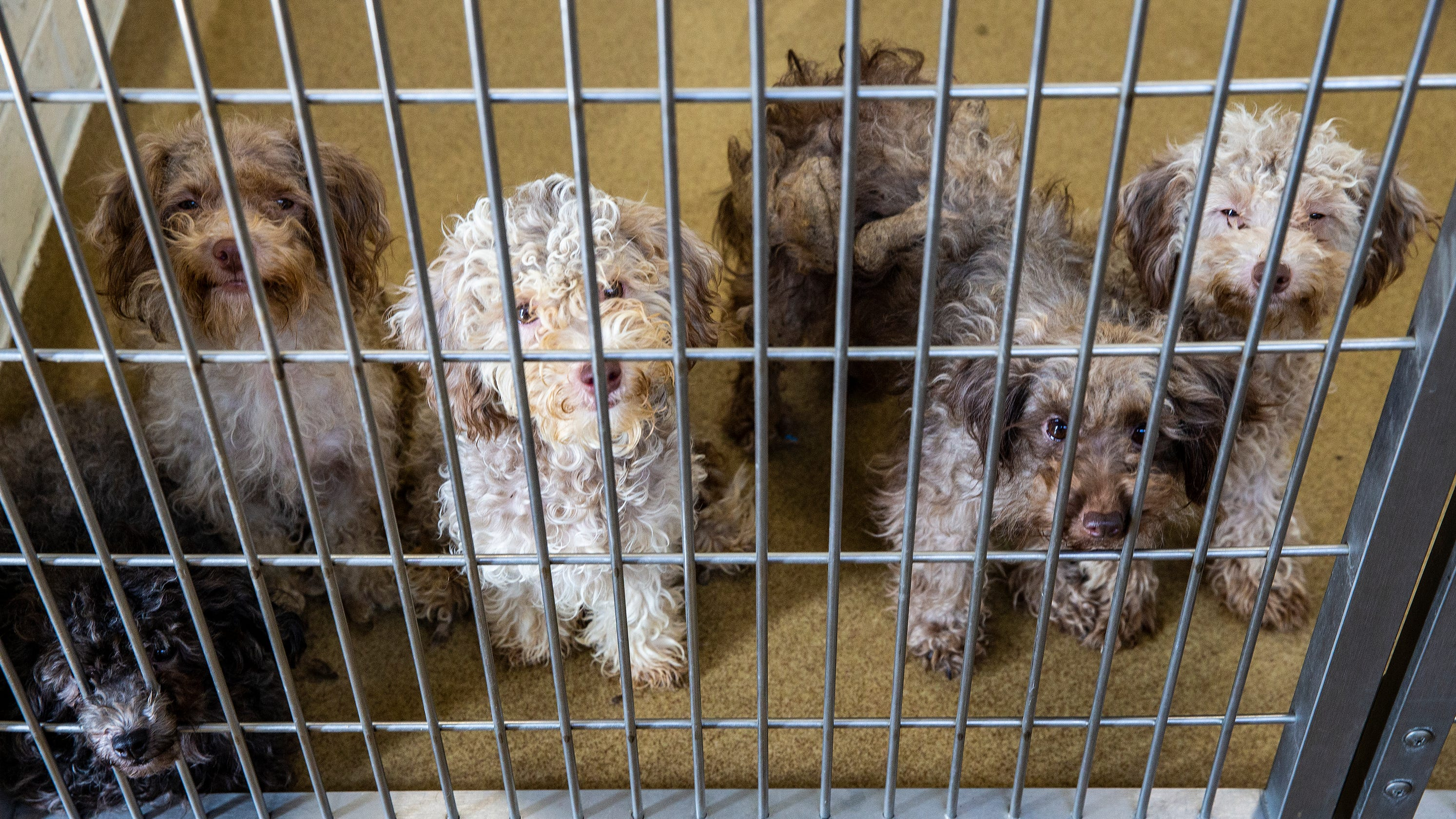 Humane Association Of Warren County Rescues 111 Dogs From