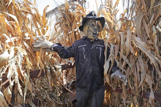 A zombie waits to scare visitors in the corn maze at the Fear District outside Fiserv Forum.