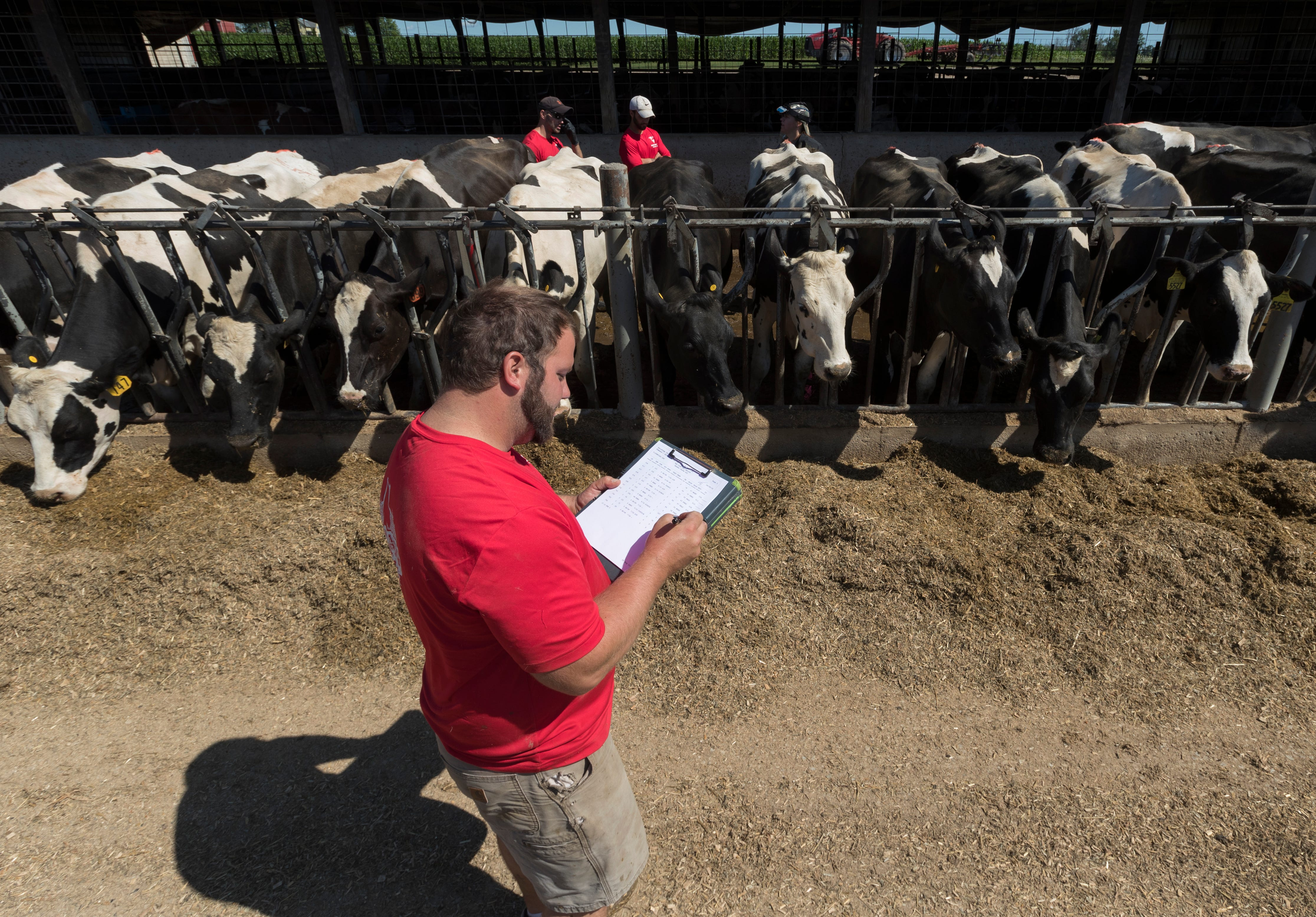 Luke Gasser, foreground, guides veterinarian Lindley Reilly to the next cow to be examined.