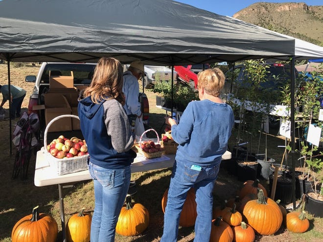 Mimbres Valley Harvest Festival goers buy produce from John York of the York Franzoy Orchard at last year's festival.   This year's harvest will be gathered at a large farmers market at the festival on Saturday, Sept. 28 at the San Lorenzo Elementary School, 2655 Hwy 35.